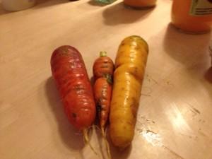 carottes amap
