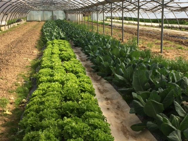 salade-chou-grand-jardin49