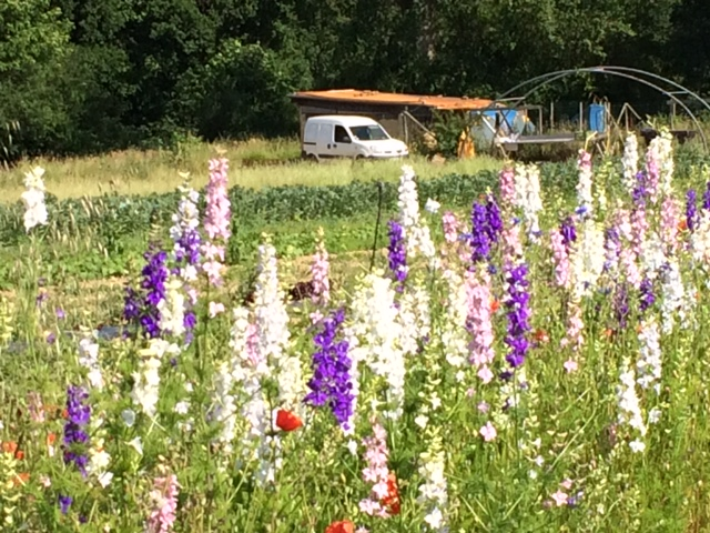 prairie-fleurie-grand-jardin