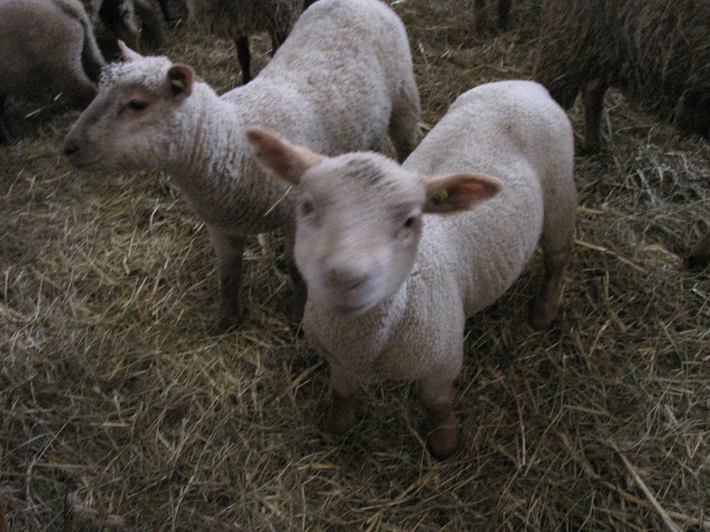 agneaux-casserie49